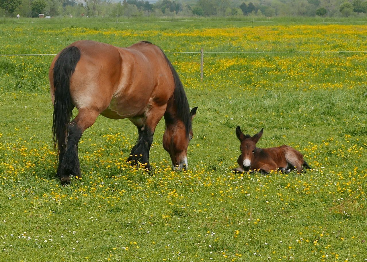 Horse Field Grass Tranquility Tranquil Scene Rural Scene Pasture Outdoors No People Nature Mammal Landscape Growth Green Color Grazing Grassy Domestic Animals Day Brown Beauty In Nature Baby Horse Animal Mother And Child Foal