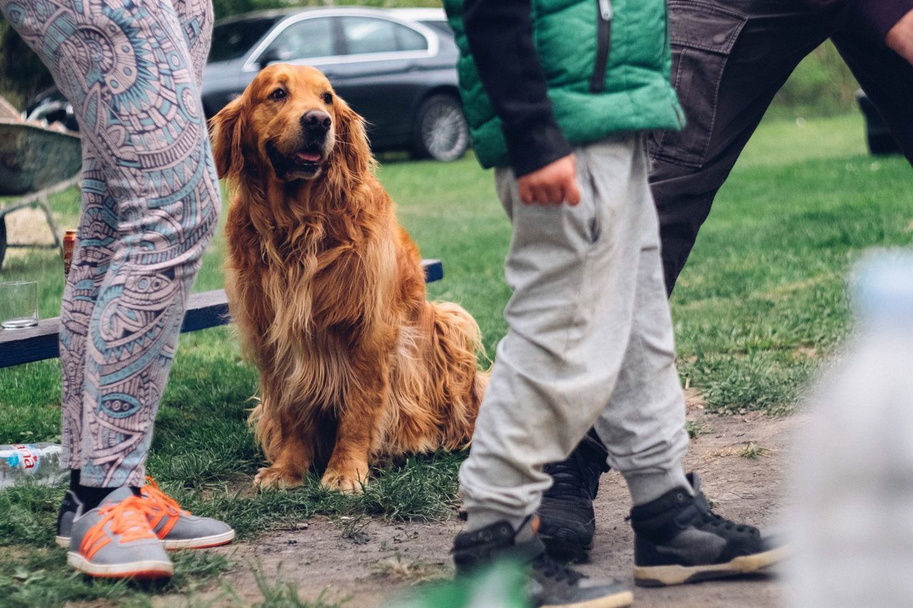Dog Pets Low Section Golden Retriever One Animal Domestic Animals Men Day Outdoors One Person Grass Real People Mammal Nature People One Man Only Adult Young Adult Adults Only EyeEm Best Shots Fujifilm_xseries