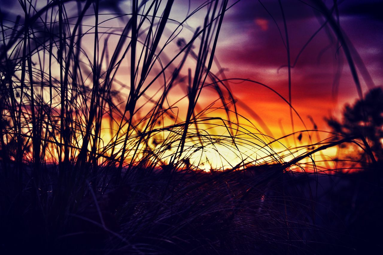 sunset, nature, growth, beauty in nature, plant, tranquility, tranquil scene, silhouette, scenics, no people, grass, sky, outdoors, field, uncultivated, close-up, landscape, tree, day
