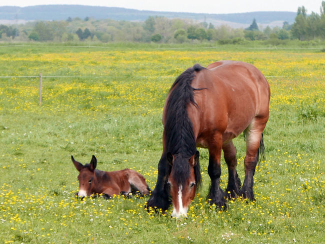 Animal Animal Themes Beauty In Nature Brown Day Domestic Animals Field Grass Grassy Grazing Green Color Growth Foal Landscape Mammal Nature No People Outdoors Pasture Rural Scene Tranquil Scene Tranquility Mother And Child Horse Baby Horse