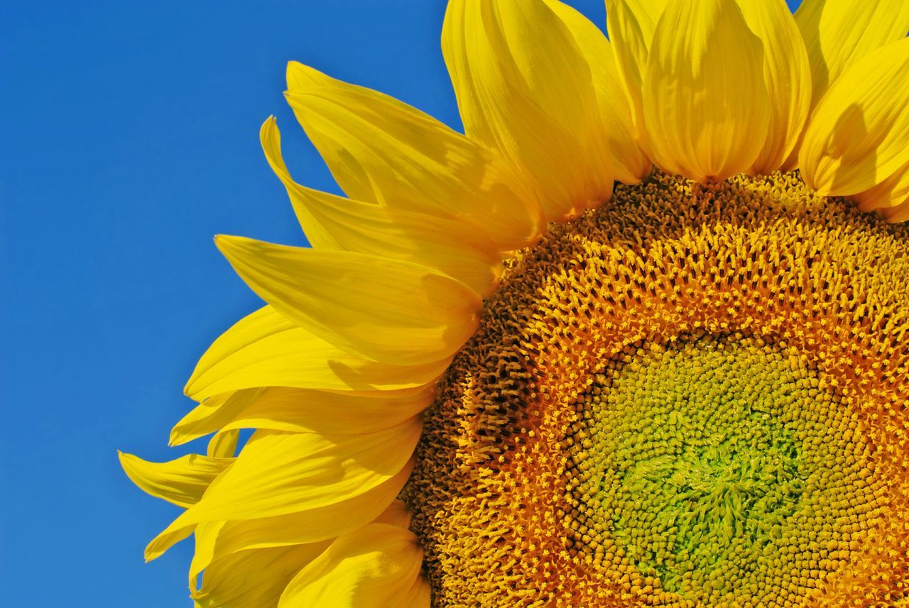 Beautiful stock photos of sunflower, Beauty In Nature, Blooming, Blue, Botany