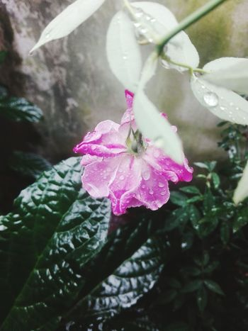 Rain Fragility Flower Growth Nature Water Beauty In Nature Day