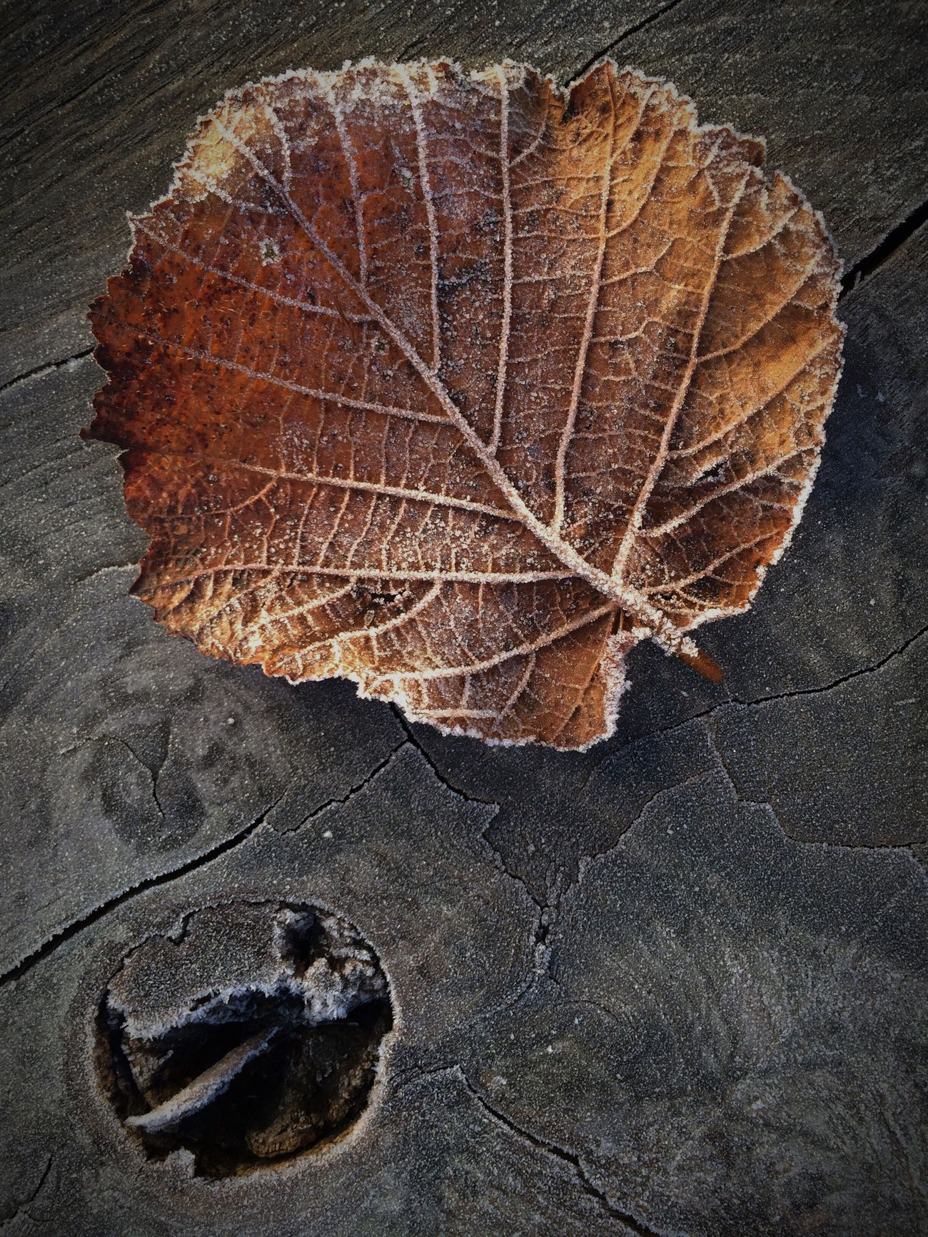 Leaves_collection Garden Photography Nature On Your Doorstep Autumn Leaves Fallen Leaf