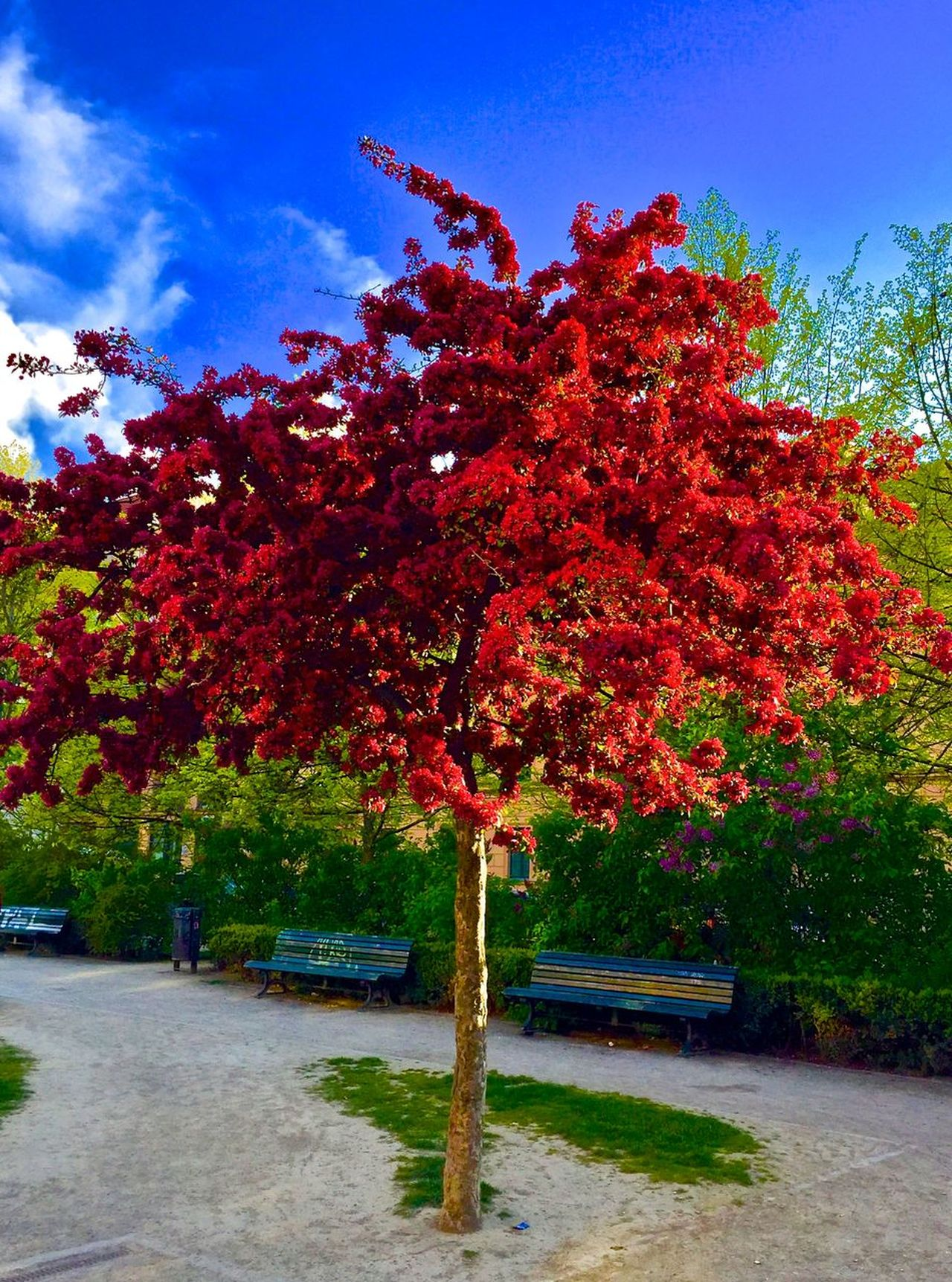 Autumn Beauty In Nature Change City Park City Trees Day Growth Nature No People Outdoors Outstanding Beauty Park - Man Made Space Red Sky Spring Stand Alone Beauty Tranquility Tree Backgrounds
