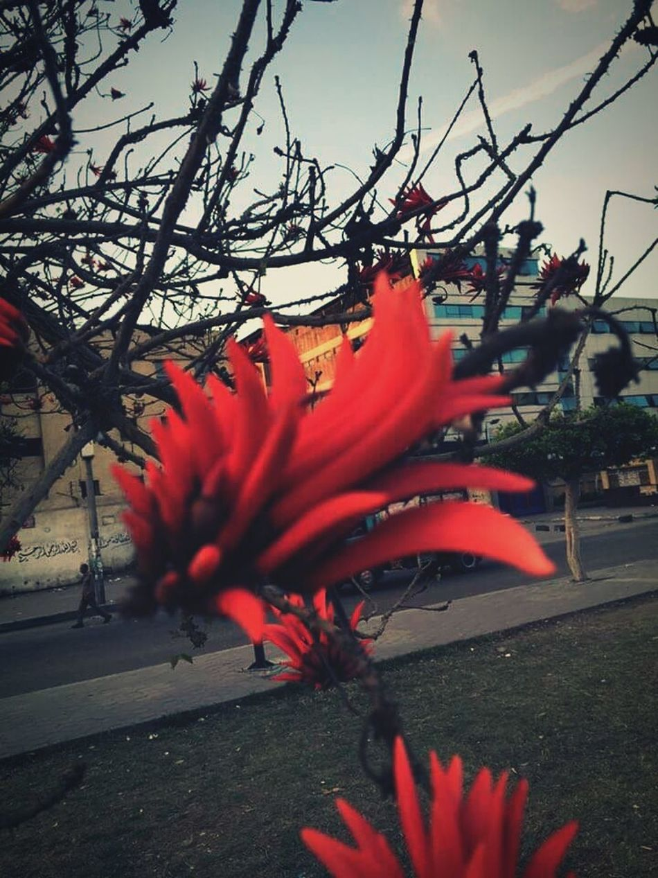 Flowertime Red Street Cairo Egypt Beauty Closeshot