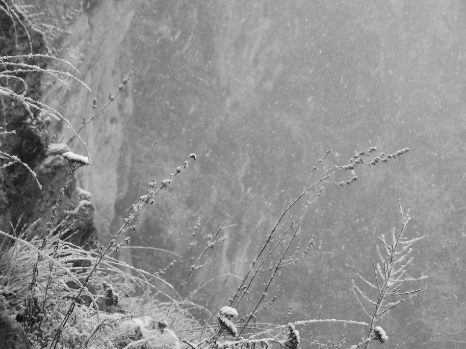 Black And White Bükk Bükk National Park Grass Hungary Mountain Nature No People Outdoors Snow Tranquility Winter