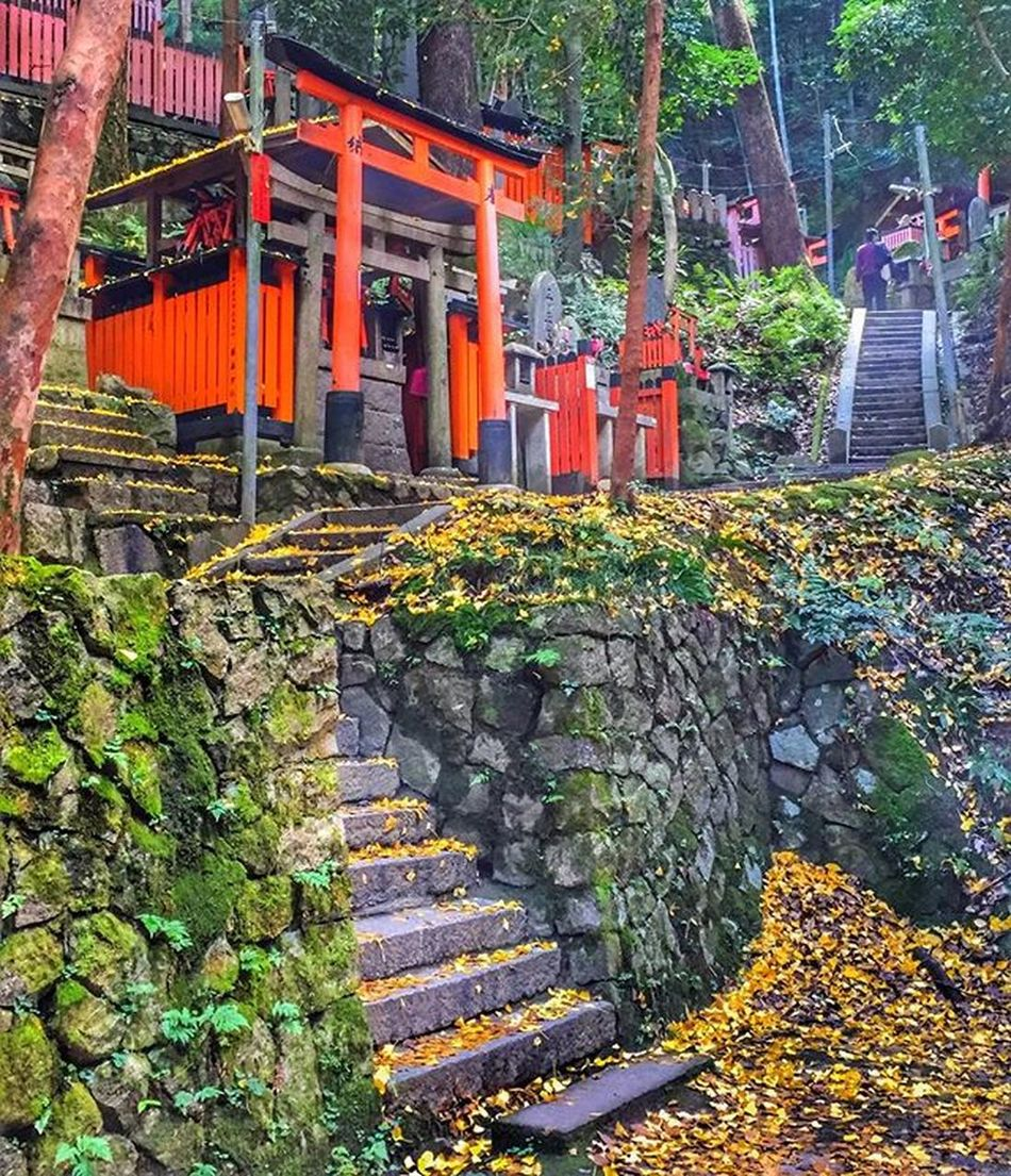 Kyoto is beautiful ! Wishing all my lovely IG friends and everything out there a great day ! 🌟Carpe diem 🌟 Autumn Japan Kyoto All_shots Landscape Landscape_lovers Landscape_captures Landscapestyles_gf Landscapes Hdr_pics HDR Phototag_it Photooftheday Master_pics Master_shot Ig_sharepoint Ig_world Igs_today Hdr_captures Instamood Globalcapture Insta_worldz Travel Holiday Nature naturelover rsa_nature warm beautiful iphonephotoacademy
