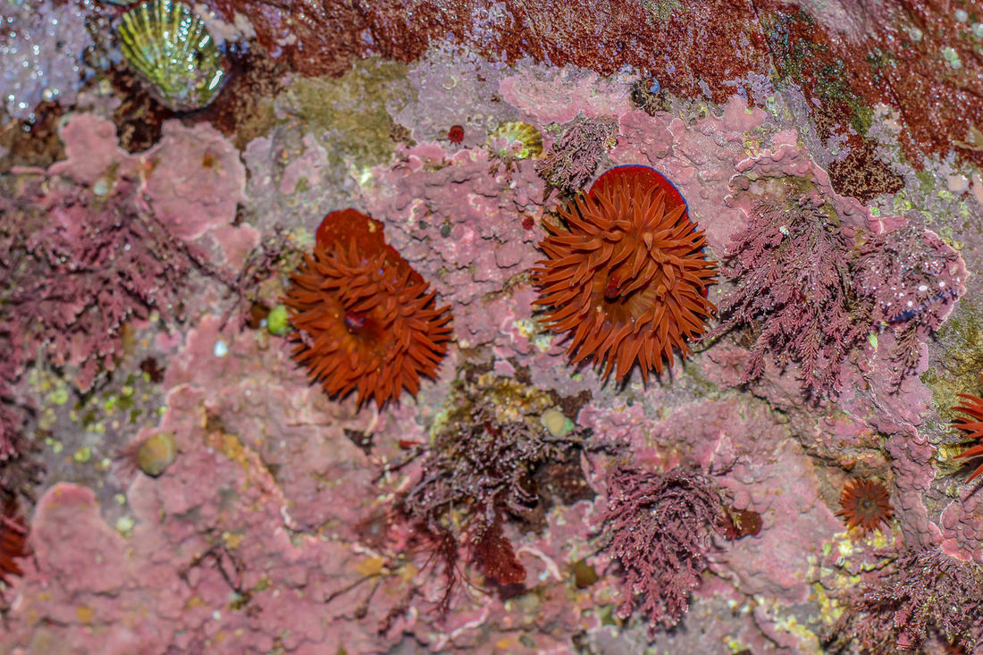 Algae Anenomes Close-up Nature Pink Red Under The Sea Underwater