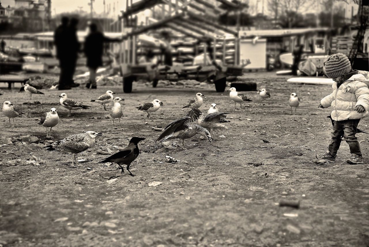 Bisgen Nimbus Divine EyeEm Best Shots Blackandwhite Black And White Children Seagull Relaxing Enjoying Life Eye4photography  EyeEm Best Edits EyeEm Nature Lover EyeEm Masterclass Istanbul Iphone6splus Seaside Bw_collection Animals Martı çocuk Sensizlik Streetphotography Black & White Seagulls