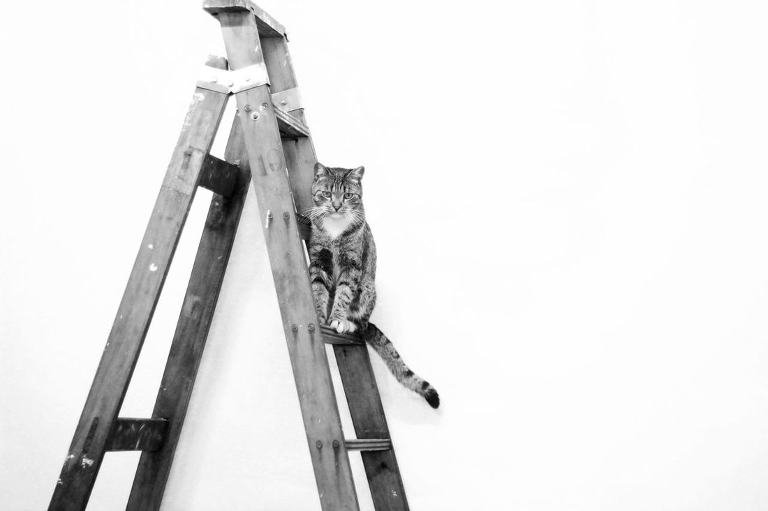 Kitty Pet Photography  Pet Portraits Stairs Artist Black And White Blackandwhite Photography Bnw Bnw_collection Cat Cats Close-up Day Kitten Mammal Pet Positve Skill  Wood - Material Work Tool Working