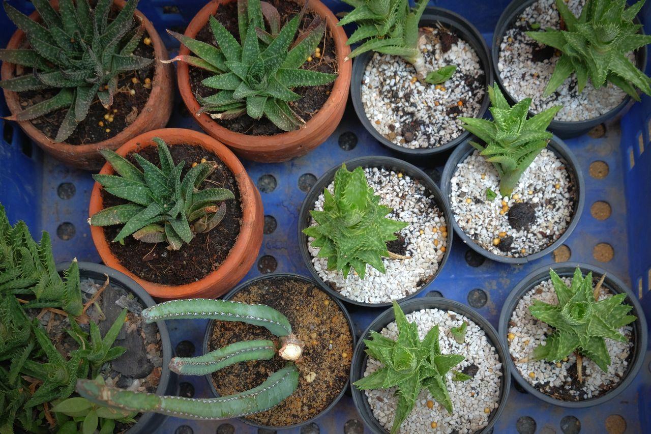 Growth Green Color Plant Nature Cactus Decor Fresh Flower Shop Cactus Close-up Decoration