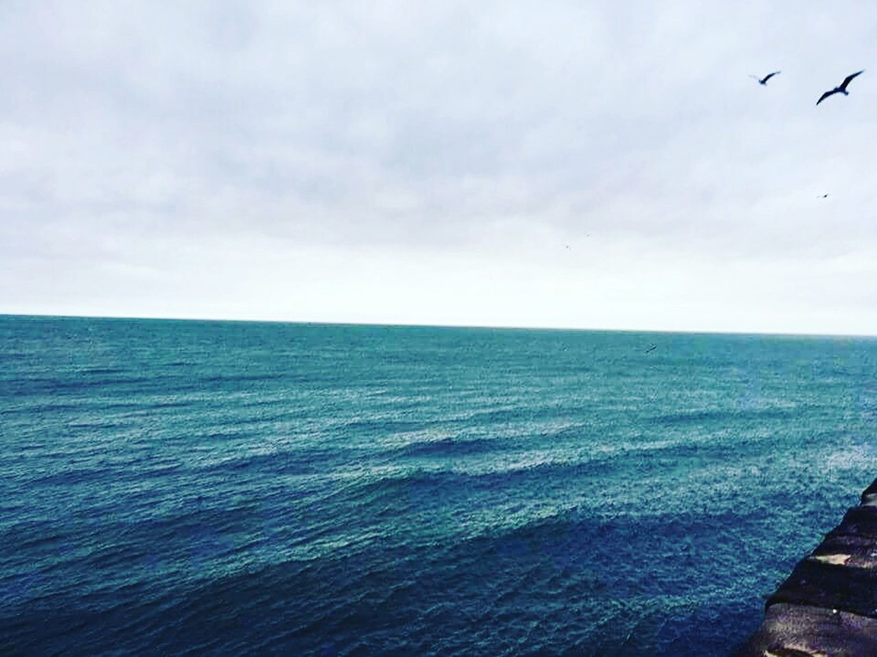 sea, horizon over water, water, tranquil scene, scenics, sky, nature, beauty in nature, flying, idyllic, tranquility, cloud - sky, outdoors, no people, bird, day, horizon, animal themes
