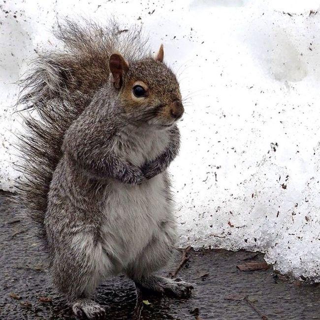 Newyork Newyorkcity NYC Sony Sonyhx50 HX50 Snow CentralPark Squirrel Wildlife Cute