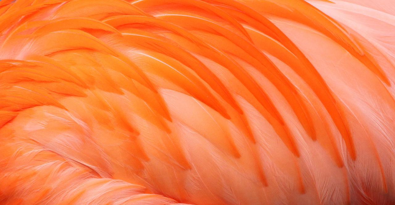 Beautiful stock photos of birds, Backgrounds, Close-Up, Detail, Feather