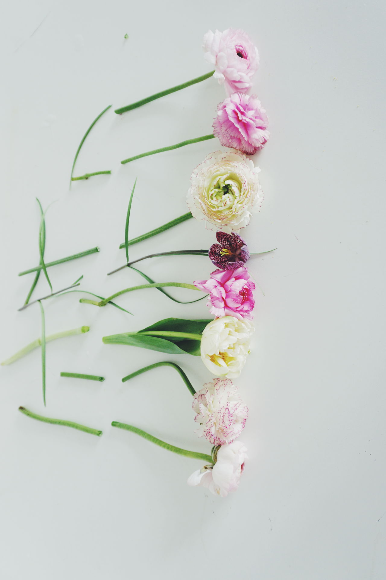 Spring flowers Beauty In Nature Close-up Day Environmental Conservation Flower Flower Arrangement Flower Head Fragility Freshness Indoors  Nature No People Pink Color Pink Flower Plant Spring Spring Flowers Springtime White Background