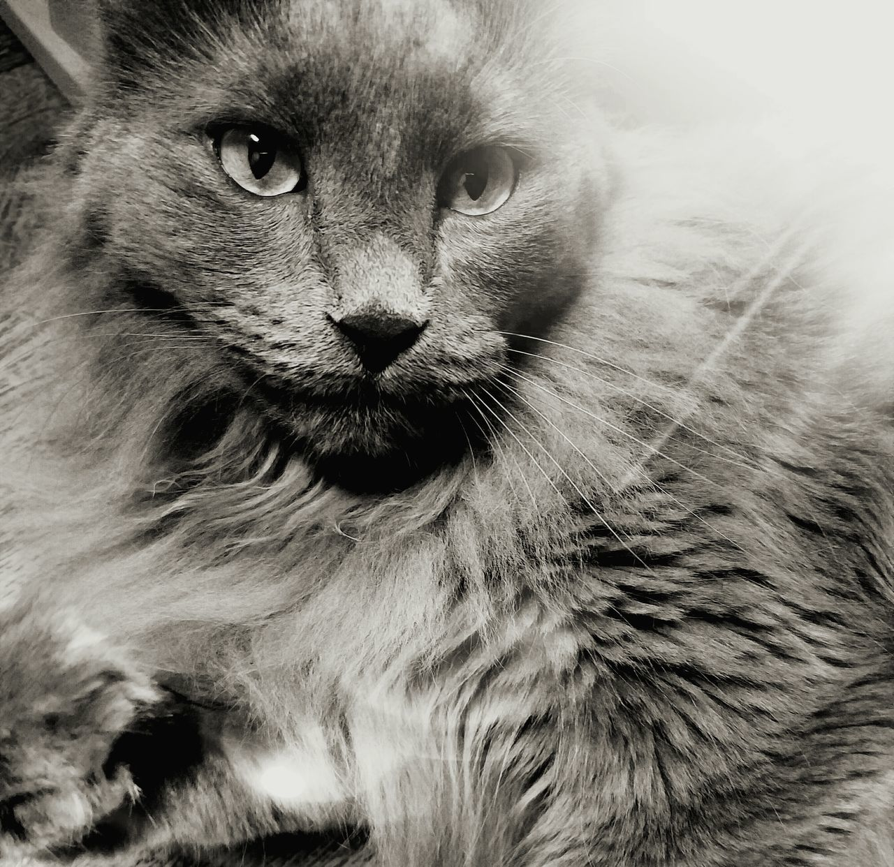 Furry Love Cats Black And White The Song Of Light Fine Art Photography MUR B&W Monocrome Photography