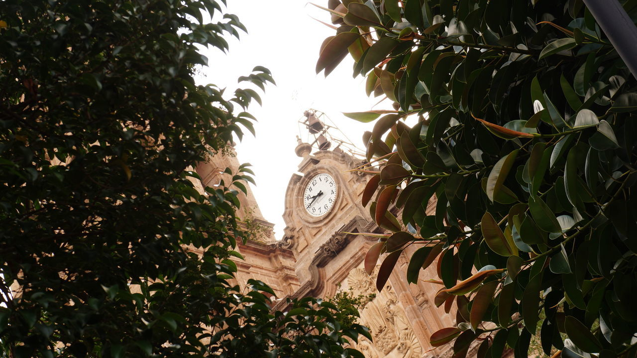 tree, leaf, growth, plant, clock, day, low angle view, no people, sculpture, branch, statue, time, nature, outdoors, clock face