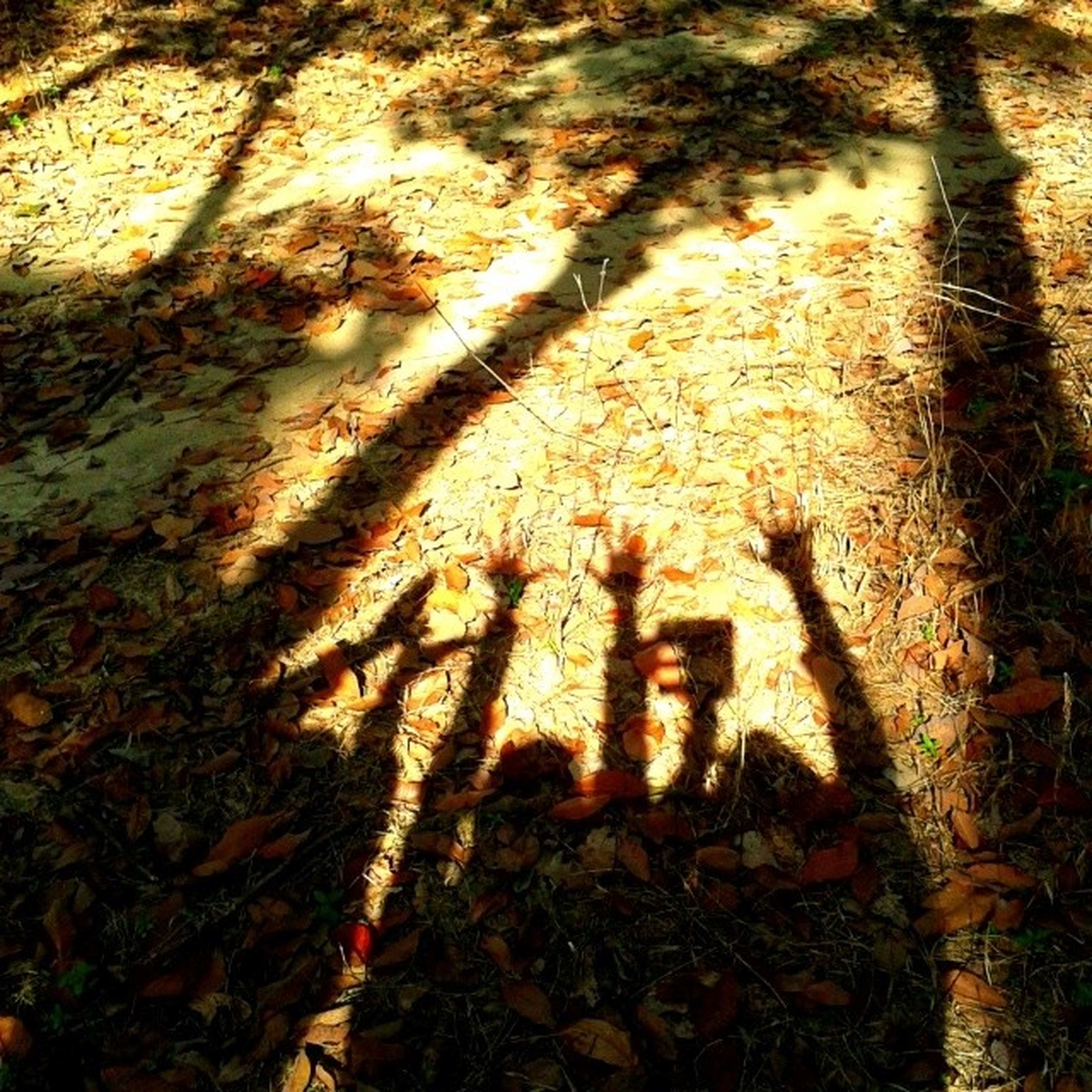 high angle view, leaf, sunlight, shadow, outdoors, growth, plant, nature, orange color, field, day, sunset, no people, focus on shadow, close-up, dry, autumn, wall - building feature