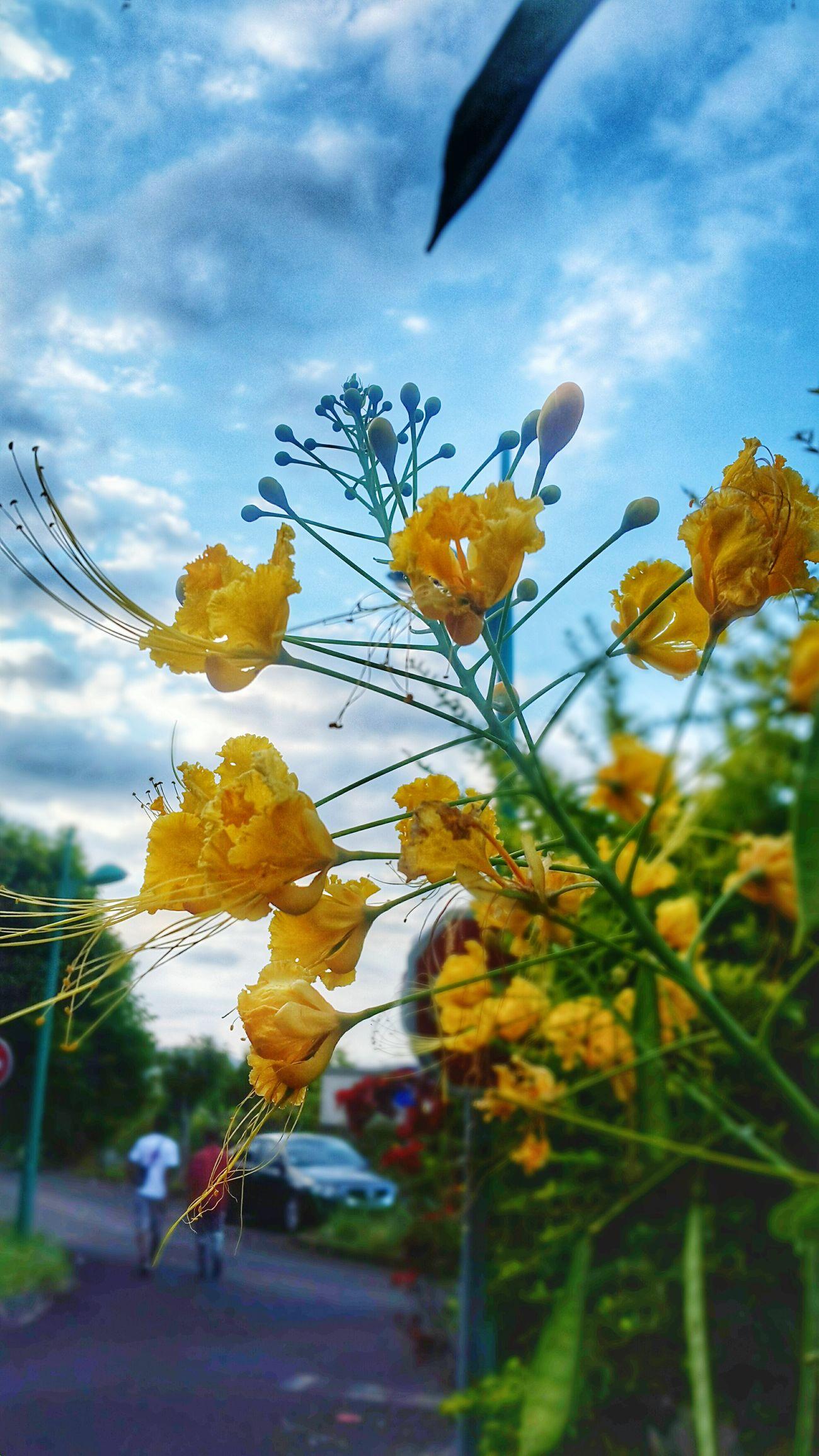 Flower Sublimephoto Inspired The Sage Paradise EyeEm Nature Lover Reunion Island Ile De La Reunion, Une Beauté, Un Paradis, Mon Ile <3 Popular Photos Landscape LéffétHdr 📷❤💍👉💋❤😀