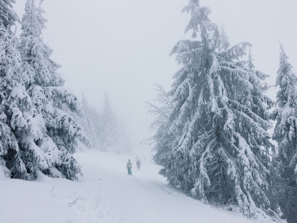 Winter Snow Cold Temperature Weather Tree Nature Beauty In Nature Covering Outdoors Scenics Frozen Tranquil Scene Tranquility Day Real People Landscape Snowing Cold