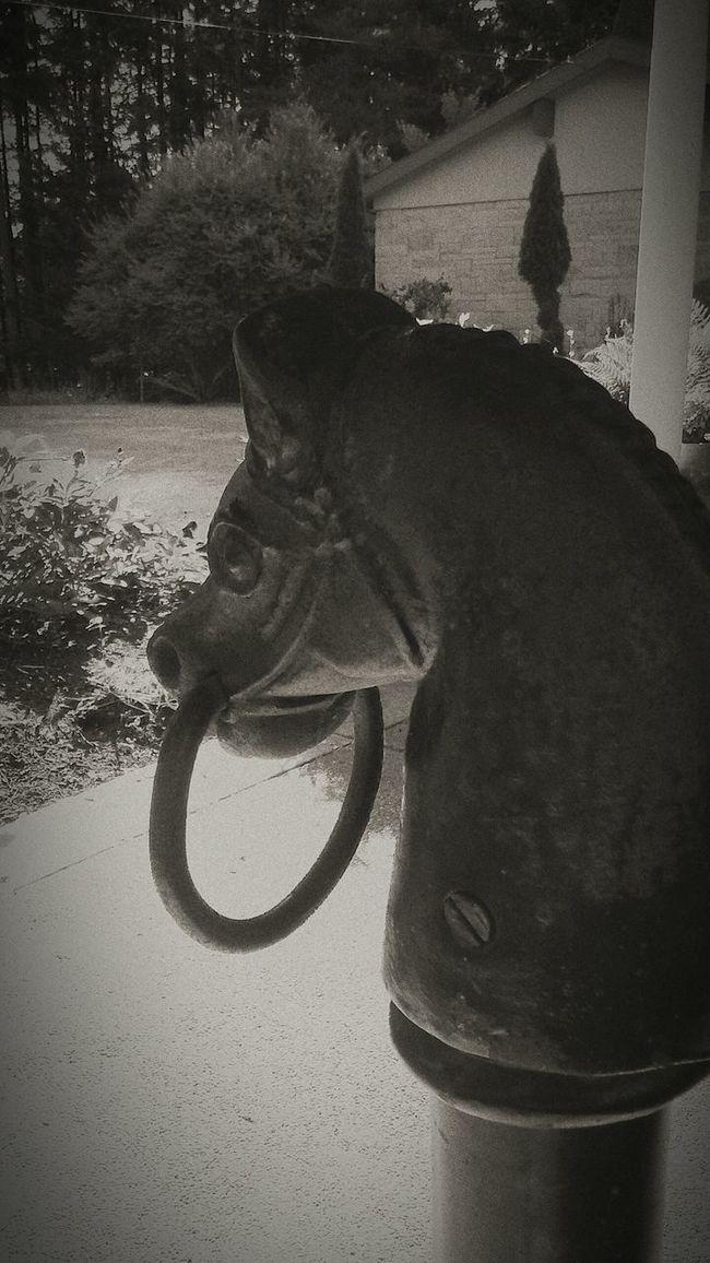 Black & White Horse Tie-up Black Beauty Iron Horse Giddyap Heavy Metal Stallion