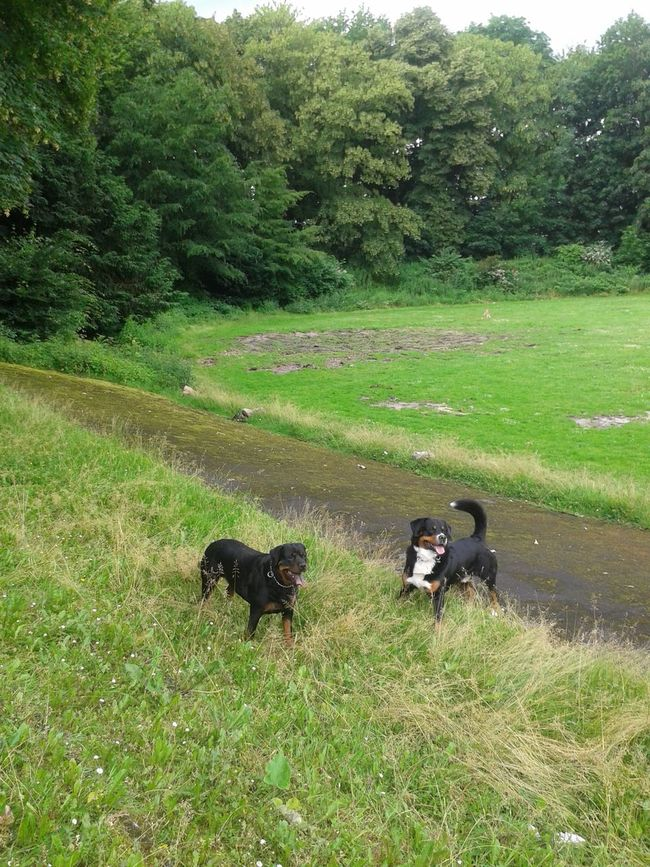 Hunderunde Freya Mit Rocky DogLover❤💓💜🐾 From My Point Of View Hundeshooting Hundefreundschaft