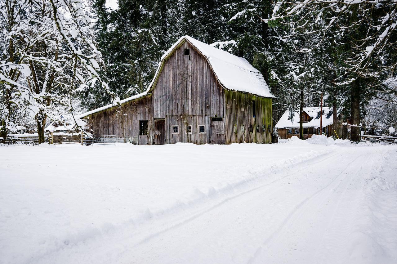 Architecture Barn Beauty In Nature Building Exterior Built Structure Cold Temperature Day Farm Forest House Landscape Nature No People Outdoors Snow Snowing Tree Winter