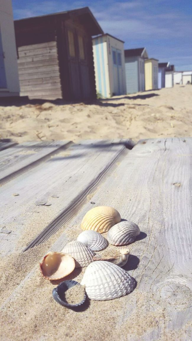 Beachlife Beach Photography Texelstrand Life Is Beautiful Great Atmosphere