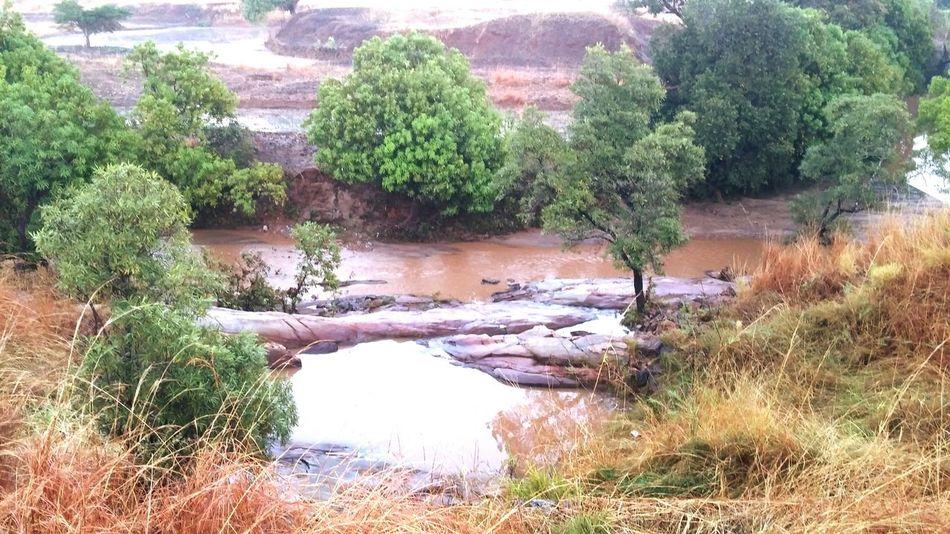Water Nature Madagascar  Trees Mango Wild Osiris