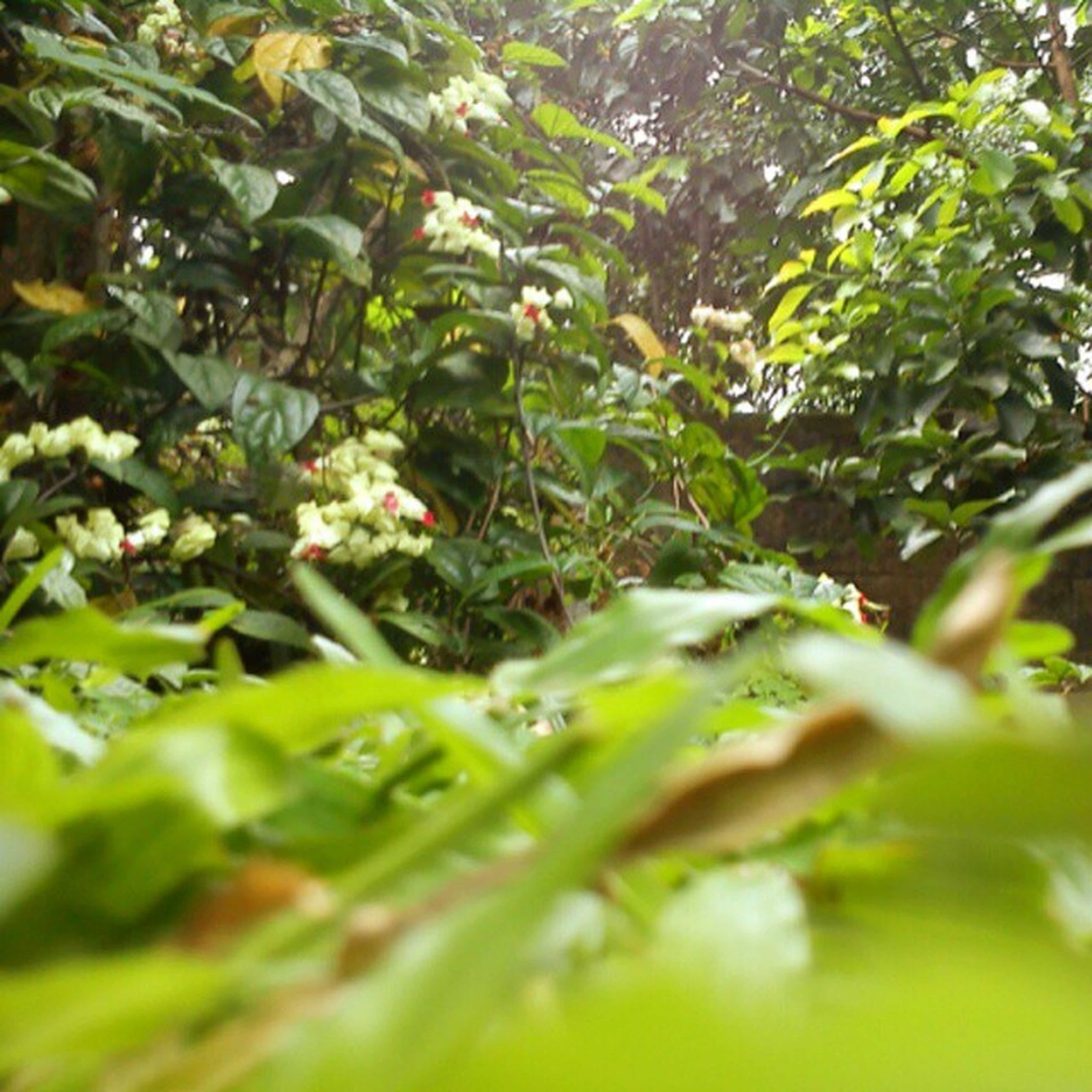 growth, green color, tree, leaf, nature, selective focus, branch, plant, tranquility, beauty in nature, close-up, day, growing, outdoors, no people, freshness, lush foliage, focus on background, green, leaves