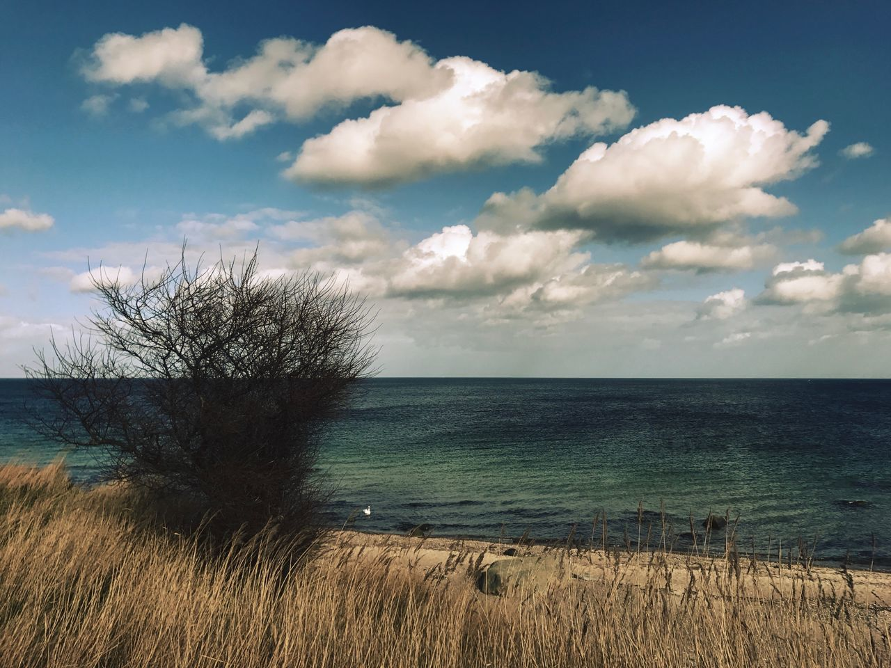 Beauty In Nature Cloud - Sky Day Grass Horizon Over Water Landscape Nature No People Outdoors Scenics Sea Sky Tranquil Scene Tranquility Tree Water