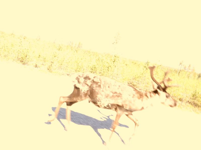 Hi! Reindeer Sighting Check This Out E10