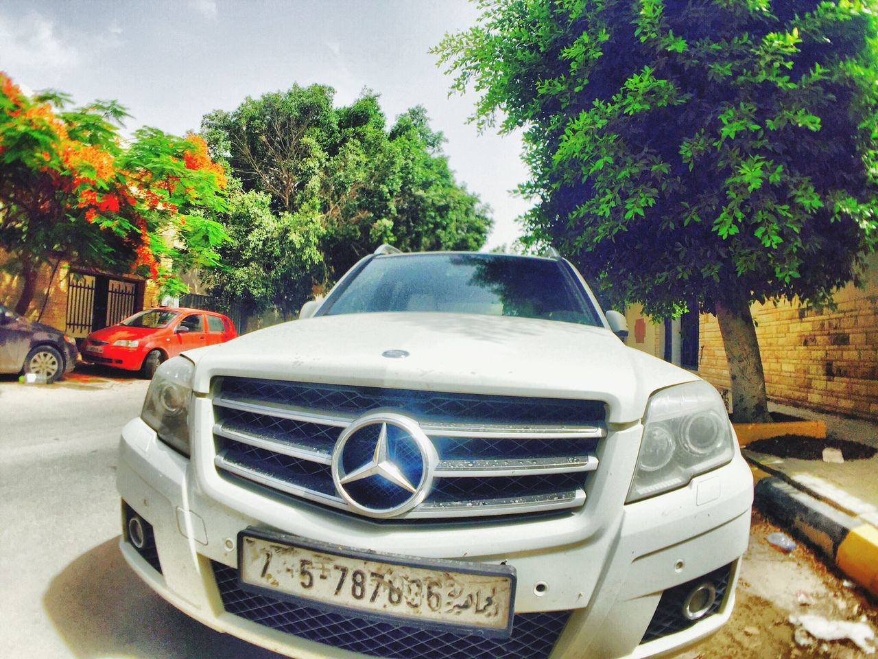 tree, car, transportation, mode of transport, land vehicle, no people, day, growth, sky, outdoors, nature, close-up