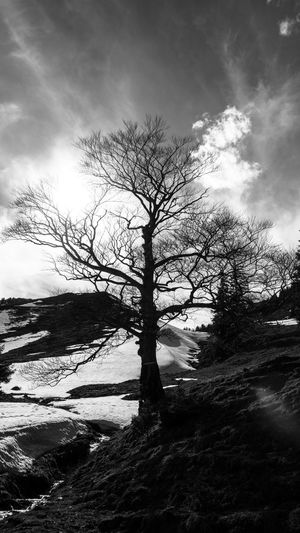 Trees Tree TreePorn Tree_collection  The Great Outdoors With Adobe The Great Outdoors - 2016 EyeEm Awards Treescollection Tree And Sky Snow Landscapes With WhiteWall Tree Silhouette Monochrome Nature Winter Wintertime Mountains Mountain Mountain_collection Silhouette Light And Shadow Bw Blackandwhite Black And White Black & White Sun_collection, Sky_collection, Cloudporn, Skyporn