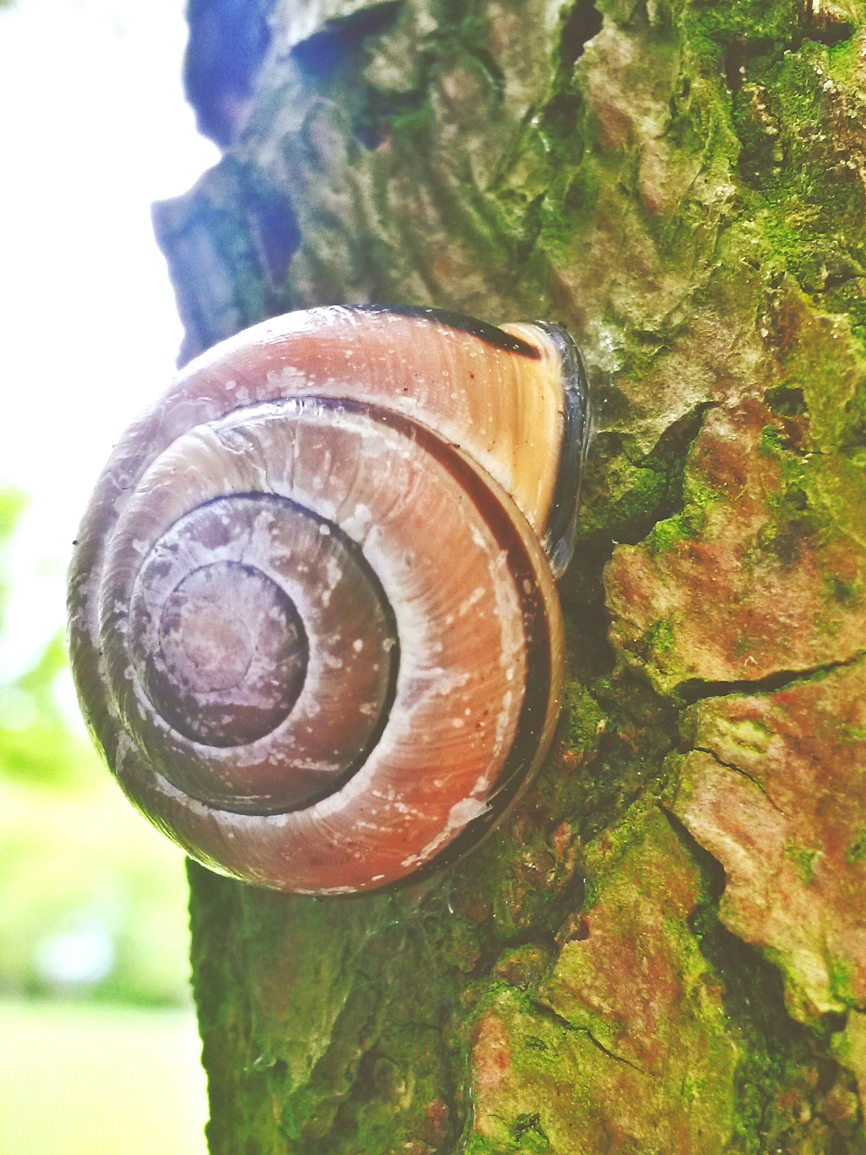 close-up, snail, focus on foreground, animal shell, spiral, textured, nature, natural pattern, pattern, rusty, wood - material, tree, day, selective focus, outdoors, metal, no people, growth, moss, shell