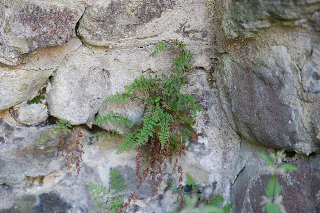 rock - object, textured, nature, growth, rough, lichen, no people, tree trunk, moss, day, plant, outdoors, tree, beauty in nature, close-up, rock face