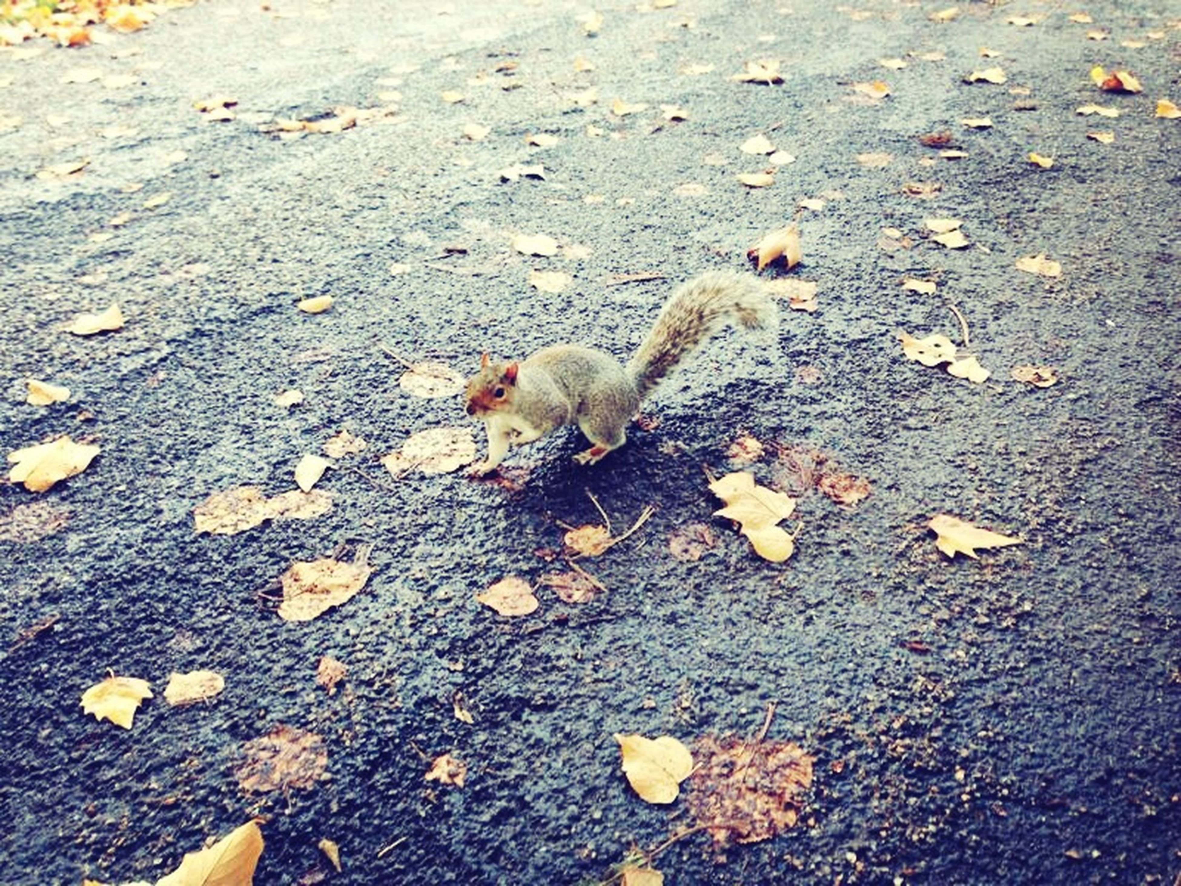 animal themes, high angle view, one animal, street, animals in the wild, wildlife, asphalt, day, ground, outdoors, nature, road, dry, no people, sunlight, leaf, field, dead animal, yellow, autumn