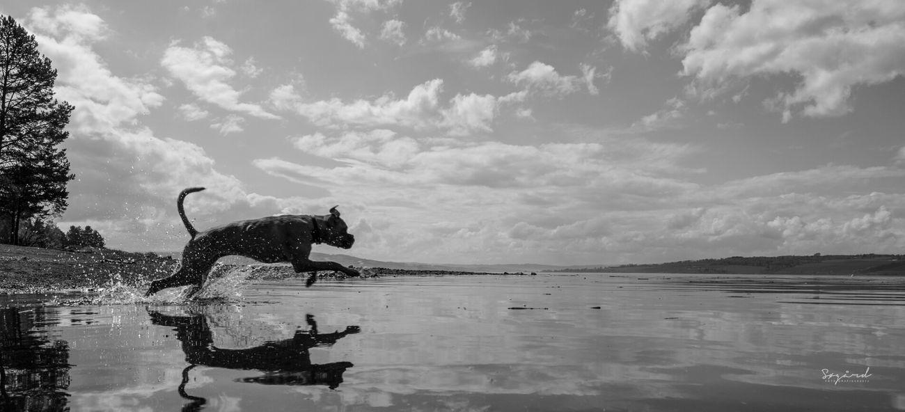 Puma dog. image taken in Hamar, Norway. Summer Hamar Dog Water