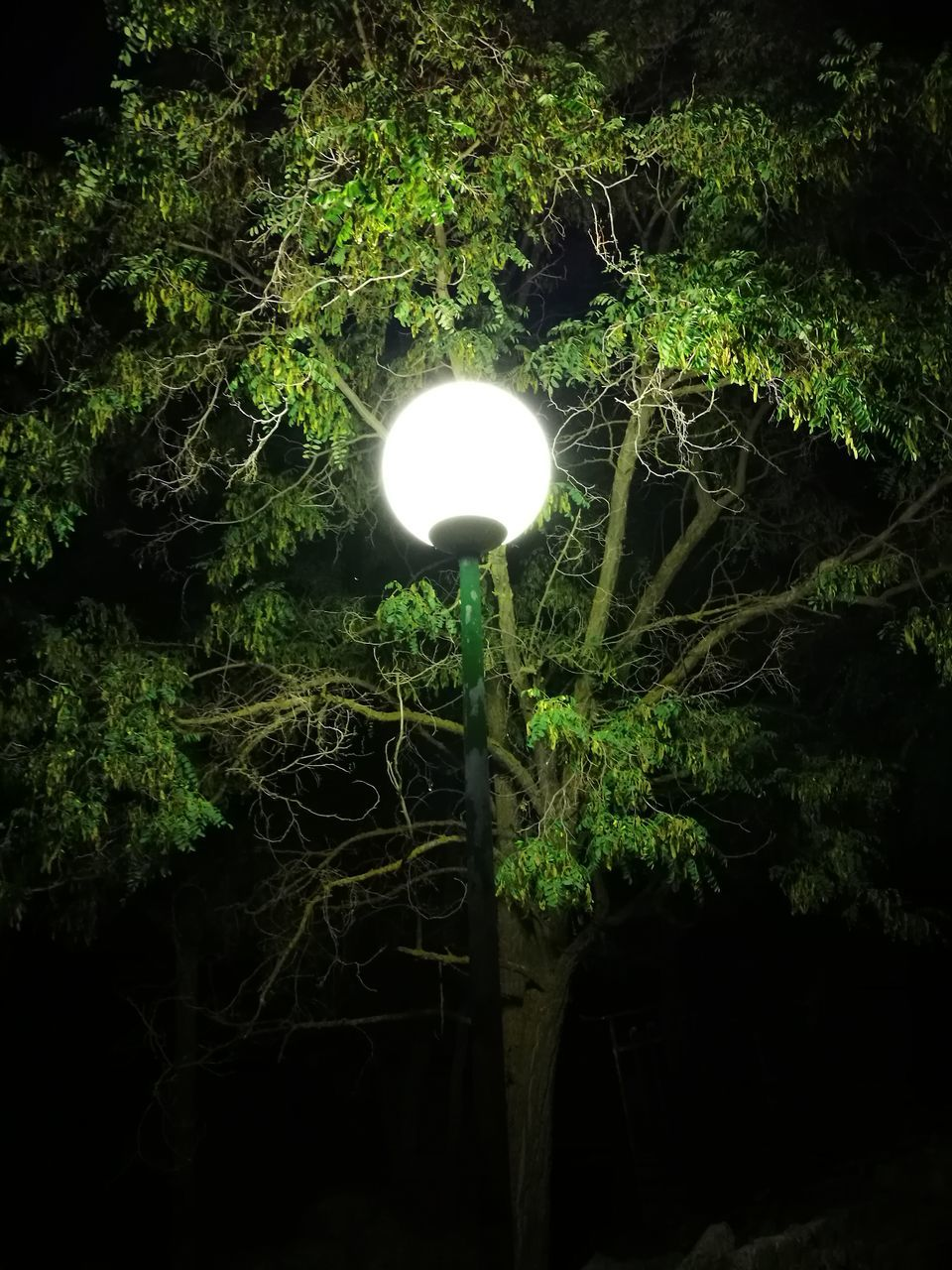 night, illuminated, growth, no people, electricity, plant, outdoors, tree, forest, green color, nature, leaf, beauty in nature, close-up