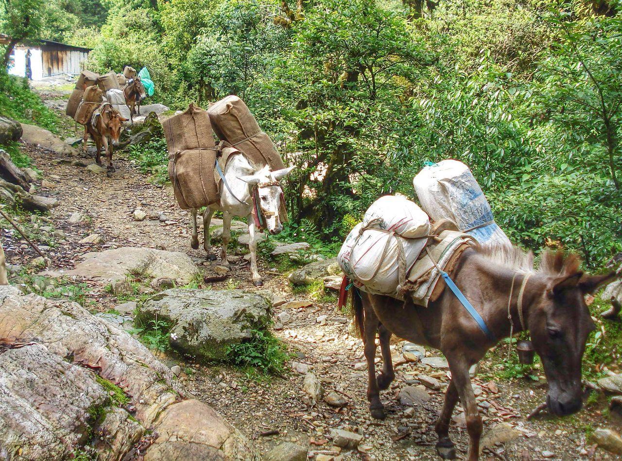 Beautiful stock photos of donkey, Animal Themes, Day, Domestic Animals, Donkey