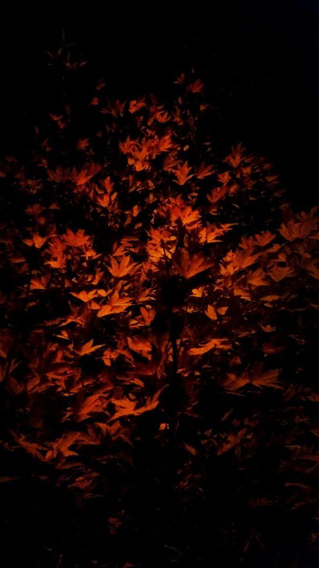 Night Lights Night Photography Boost Filter EyeEm Best Edits