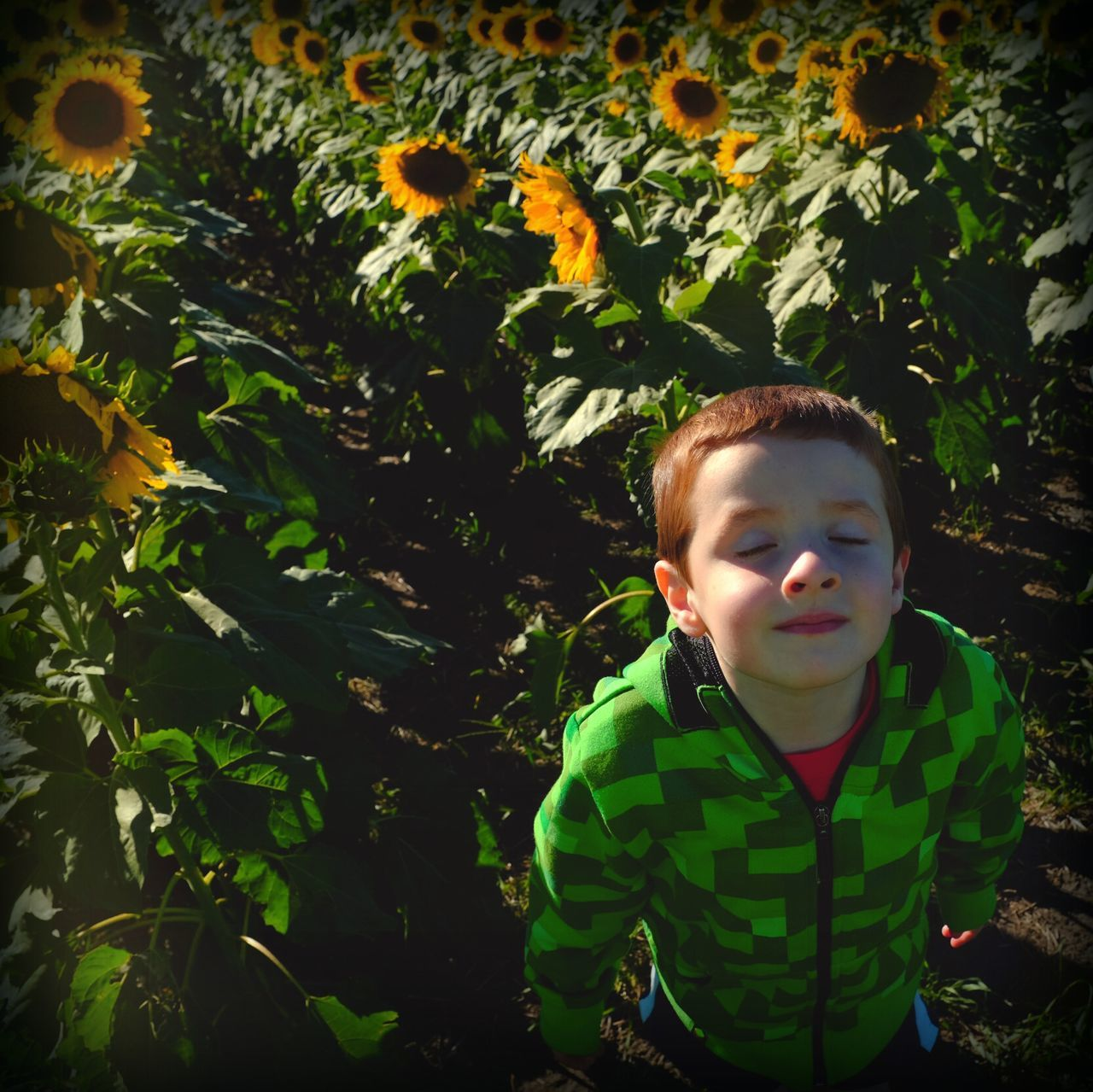 """""""If I was a sunflower, I would face the sun."""" Victor Santino My Best Photo 2014 The EyeEm Facebook Cover Challenge Portrait Of A Friend Eye For Photography Candid Portraits EyeEm Best Shots Beautiful Sunlight Darkness And Light Fall Beauty"""