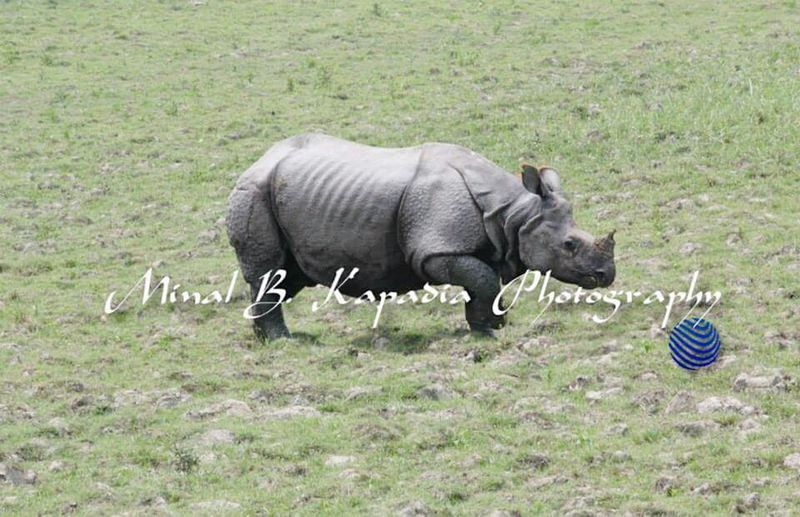 Rhino Beauty Wild India Love First Eyeem Photo