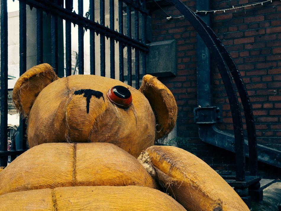 Beautiful stock photos of bear, Abandoned, Childhood, Damaged, Day