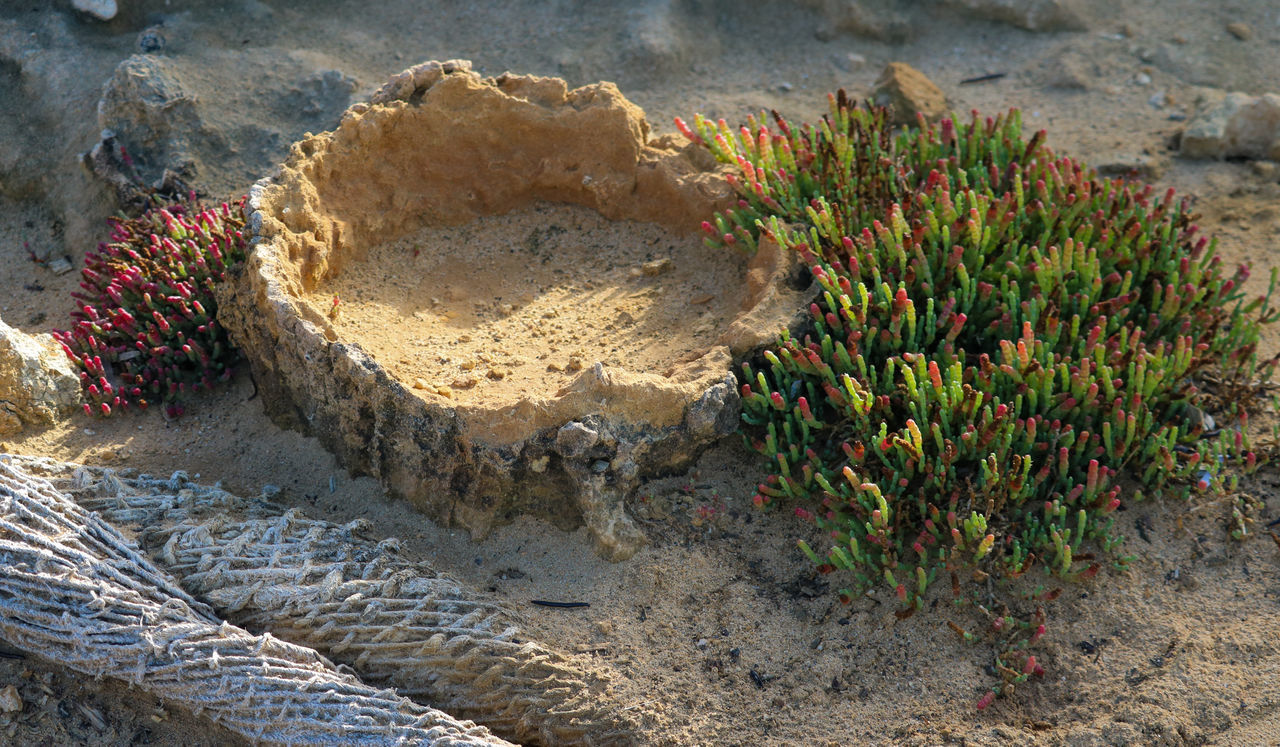 Beach Beach Plants Beauty In Nature Day EyeEm Nature Lover Fragile Green Color Limestonme Nature Netting No People Outdoors Sand Sandstone Sea Succulents