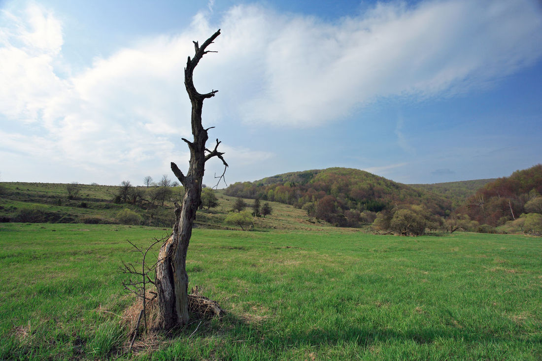 Beskid Beskid Niski Cichani Ciechani Dead Tree Dolina Cichani Dolina Ciechani Landscape Mountain Mountains Nature Niski Poland Polen Scenics Tree