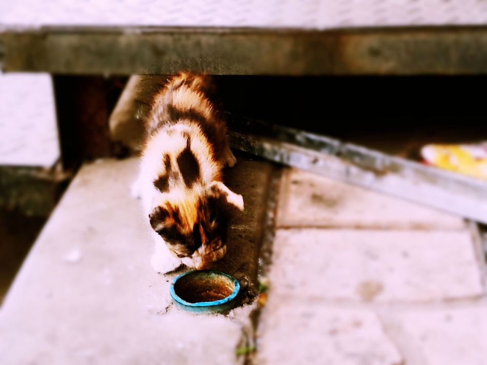 Poor little kitty looking for food . Animal Themes One Animal Mammal Outdoors Domestic Animals Homeless Homeless Cats Homelessness  Homeless Animal Homeless Kitten Homeless Cat Kitten HuaweiP9 Huawei P9 Plus Huaweiphotography Hua Wei P9 Plus Pets Animal Homelessness  Domestic Cat Cat