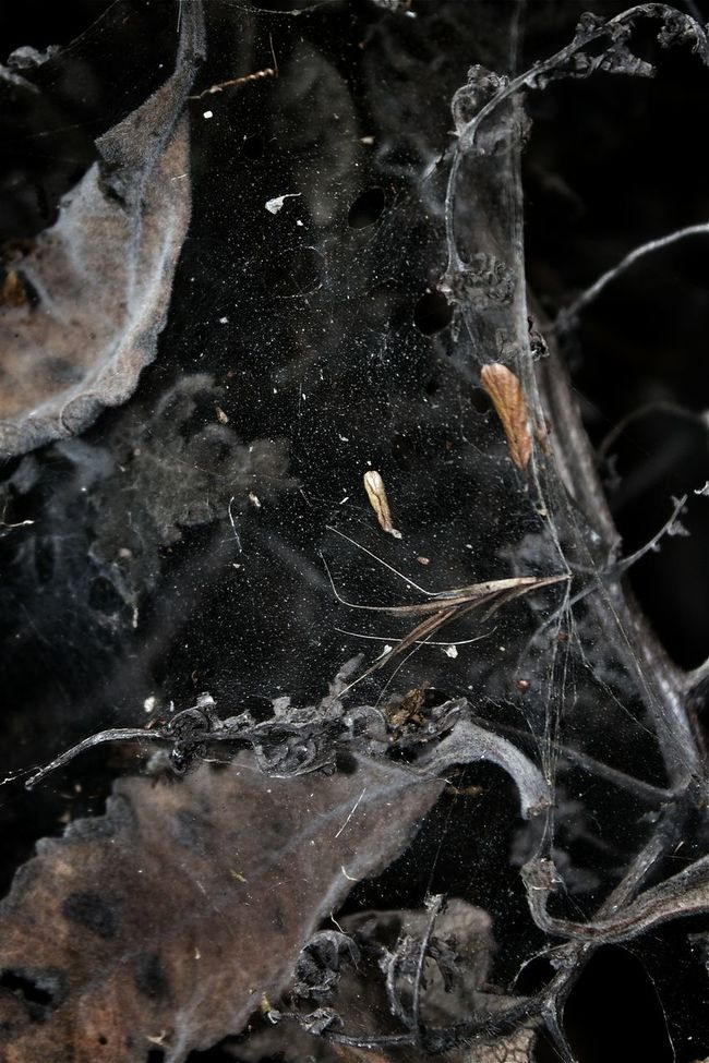 Abstract Spider Web Dead Leaves Web Textures And Surfaces