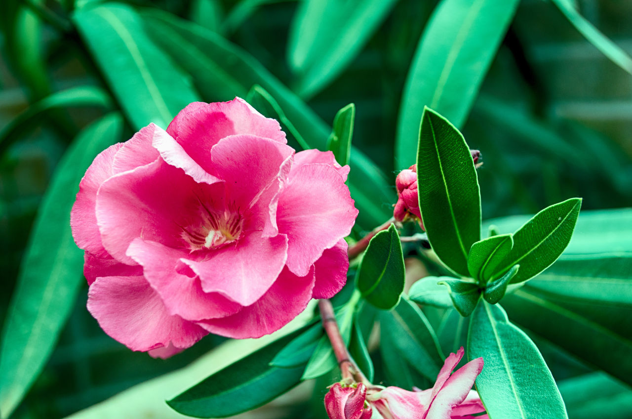 2015  Beauty In Nature Close-up Day Eddl Flower Flower Head Fragility Freshness Green Color Growth Nature No People Outdoors Petal Pink Color Plant Zaragoza