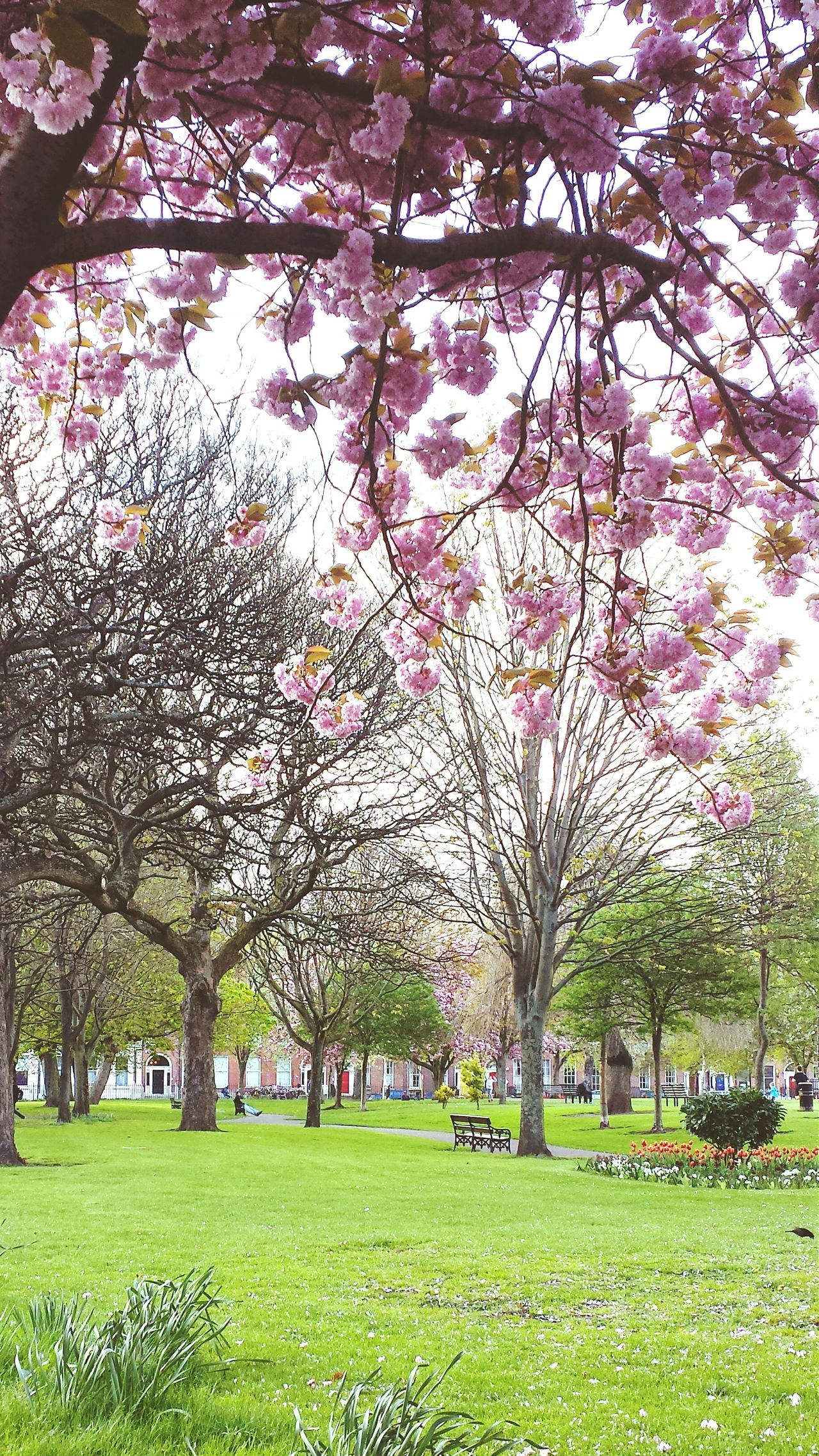 Loving beautiful Dublin in spring. Nature Springhassprung